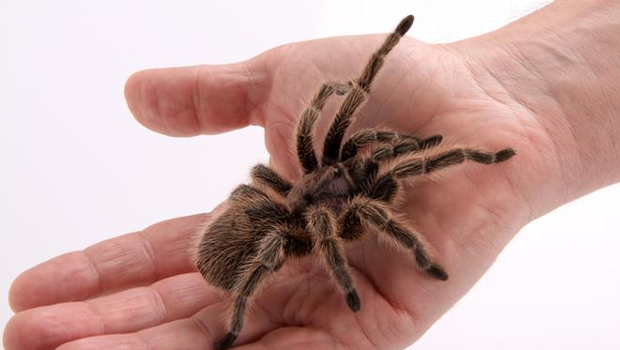 Spider Phobia Hypnotherapy - Haywards Heath, West Sussex